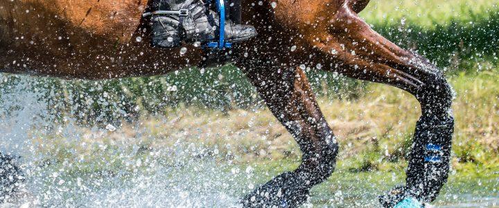 Hittegolf/warmte en trainen van je paard