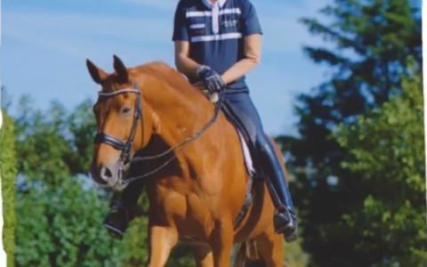 Sponsor gaat allerbeste paardenvoer verkopen!!