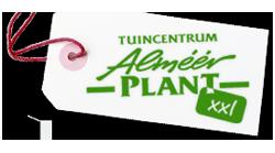 hoofd-almeerplant
